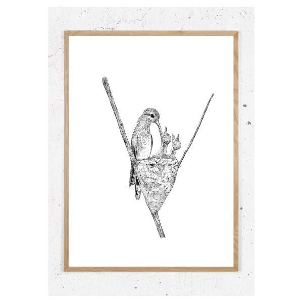 Plakat med kolibri