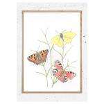 Plakat med danske sommerfugle