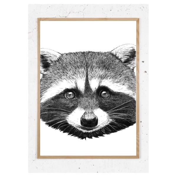 Plakat med vaskebjørn