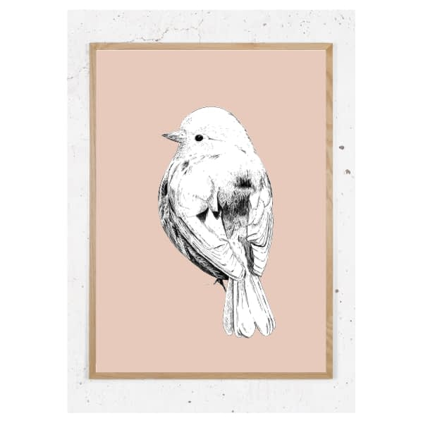 Amerikansk spurvefugl_gl.rosa