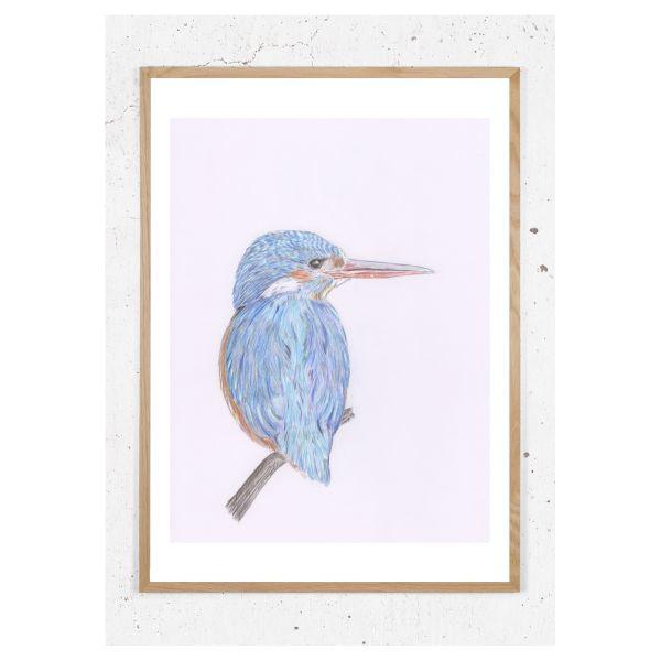 Plakat med farvestrålende isfugl