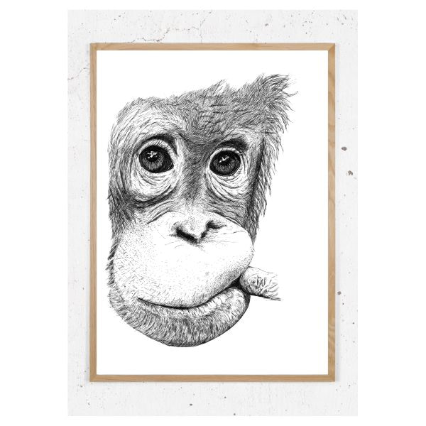 Plakat med orangutang