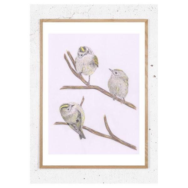 Plakat fuglekonger