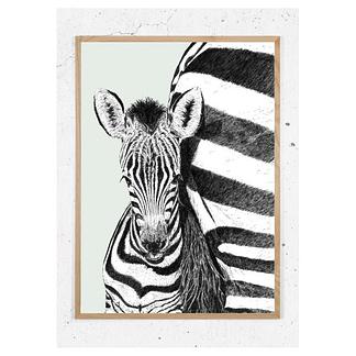 Zebra_støvetgrøn